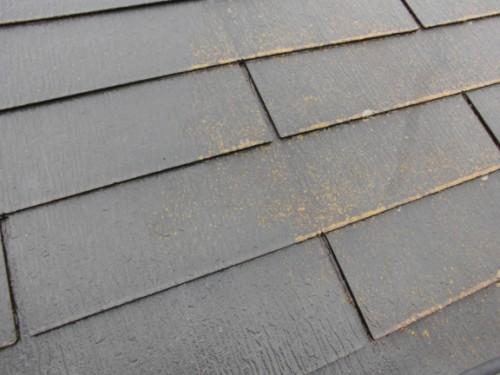 コケの付着した洗浄前の屋根
